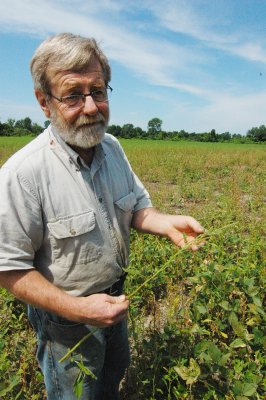 Brown shows waterhemp in a spare stand of soybean crop that received too much rain. Constant rains washed away herbicides that kill the prolific weed.